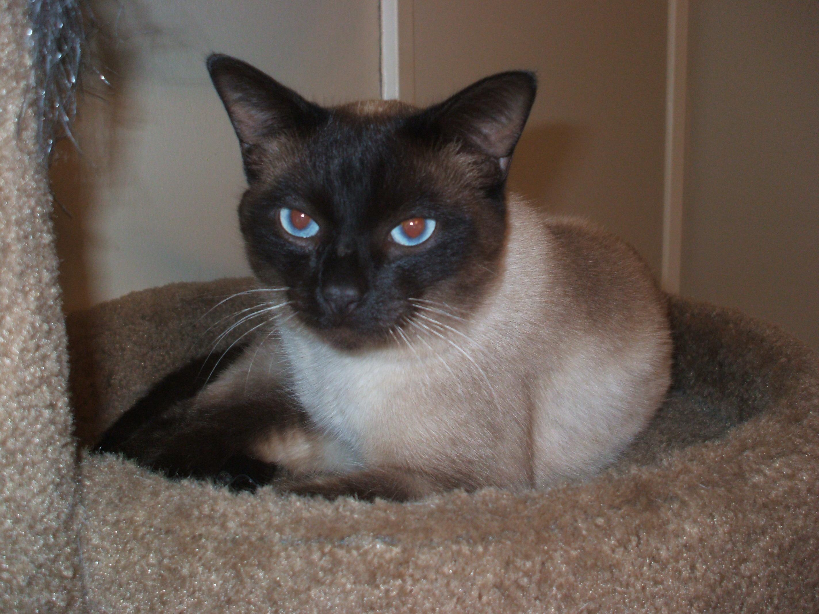 gastrointestinal lymphoma in cats